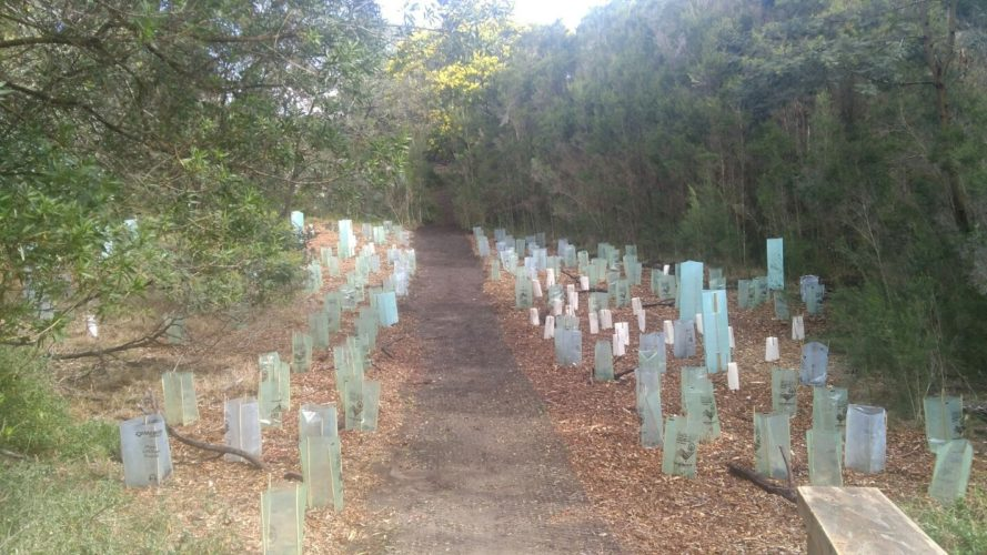 Pathway linking 100 Steps to Lake King foreshore completed